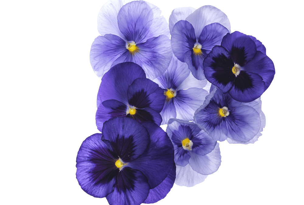 Forgiveness and Violets: 52 short stories